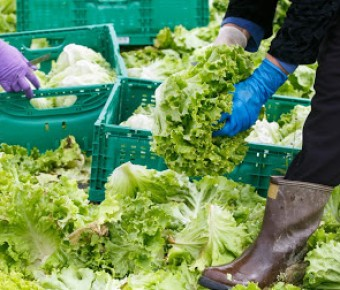 First Technical Webinar – Sustainable food systems and nutrition: Food Post-Harvest Losses